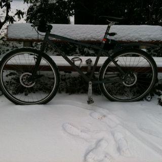 Kona snowy