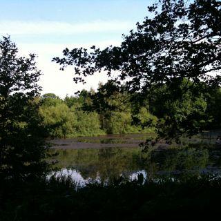 Bahrenfelder See