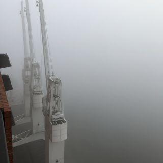 Nebelkräne