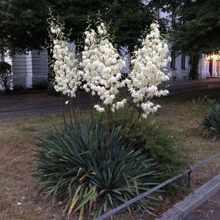 Blume unbekannt